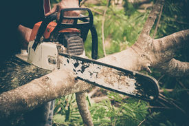 picture of cutting trees  - Man cuts tree with chainsaw - JPG
