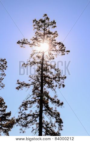 Backlight Tree Silhouette