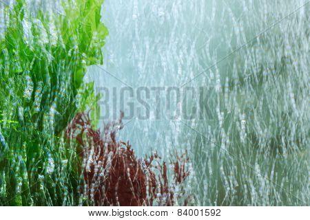 Macro Of Algae With Many Little Blur Bubbles In Aquarium