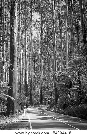 Forest Road Black And White
