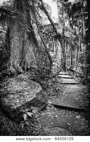 Forest Path Black And White