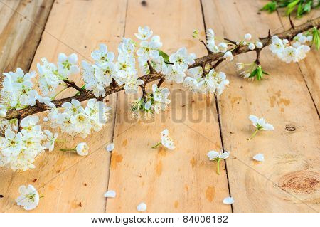 Plum Blossom With White Flowers On Wood Background.