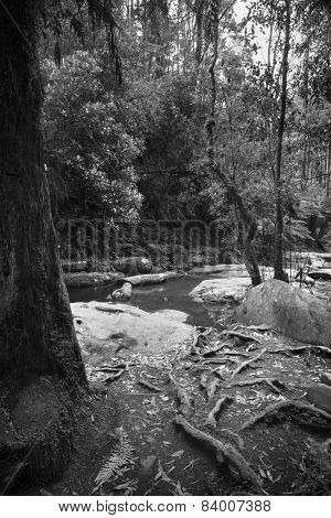 Otways National Park Black And White