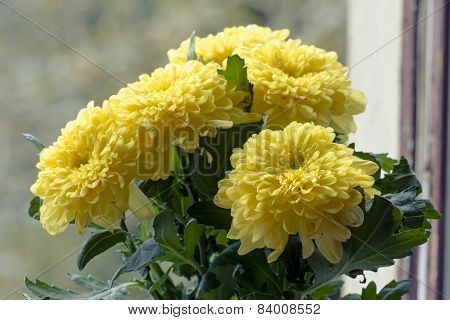 Beauty Bouquet Of Yellow Chrysanthemums