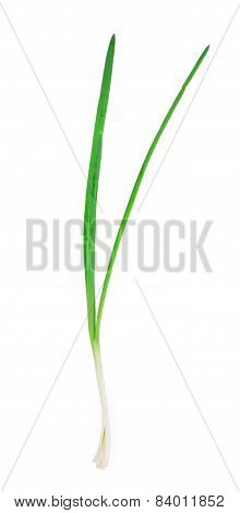 Beautiful spring onions