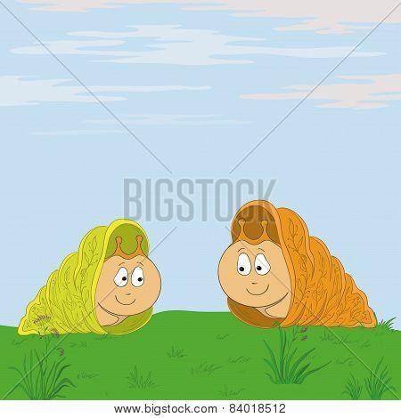 Snails meet in the meadow