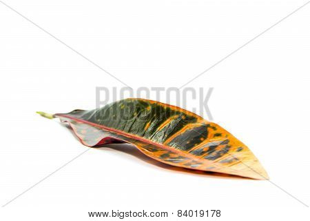Orange And Deep Blue Leaf Shape And Form