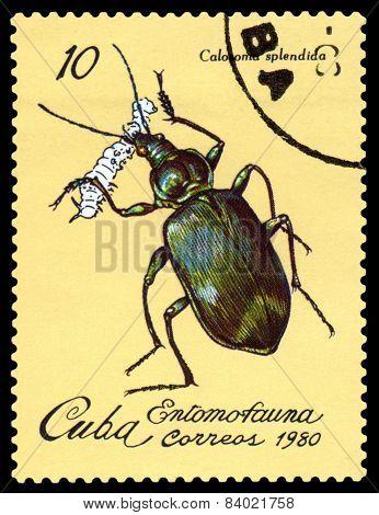 Vintage  Postage Stamp. Beetle Calasoma Splendida.