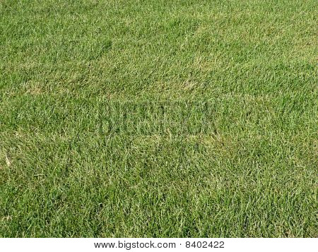 Green Grass For Background
