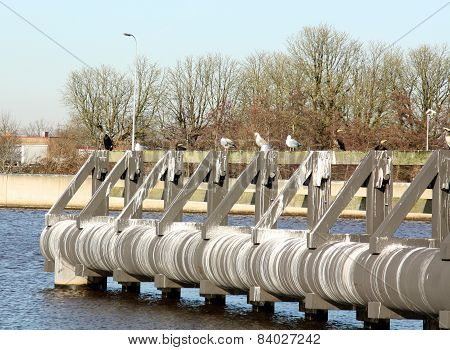 Mooring posts and seagulls