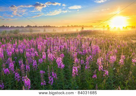 Rural Landscape With The Sunrise  And  Blossoming Meadow