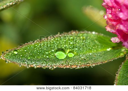 Green Leaf  With Water Drops Close Up A Macro