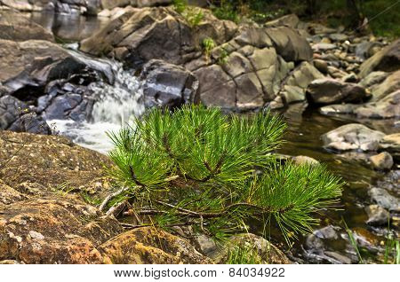 Small fir branches and rocks in water at Black river gorge