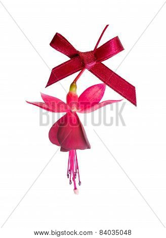 Beautiful Fuchsia Flower With Red Bow Isolated On White Background
