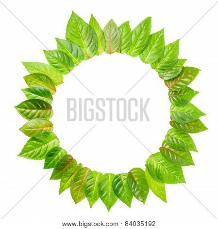 Round Frame Of Fresh Green Leaves Is Isolated On White Background