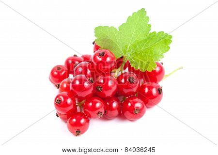 Red Currant Superfood Isolated White Background