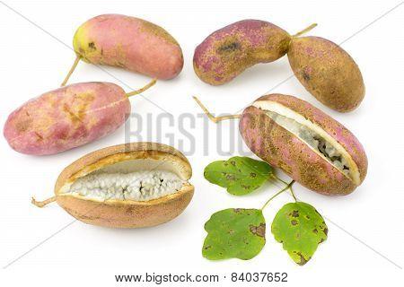 Chocolate vine fruit