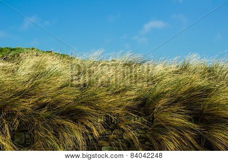 Summertime Grasses Sway Behind a Dry Stone Wall with Blue Sky