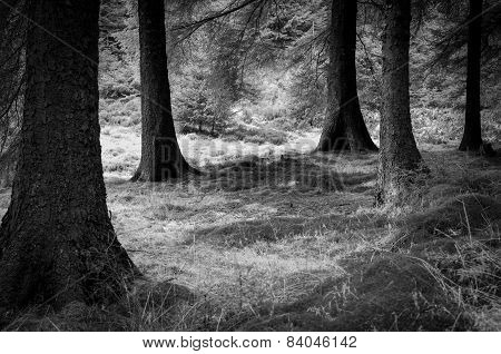 Forest Edge in Peak District