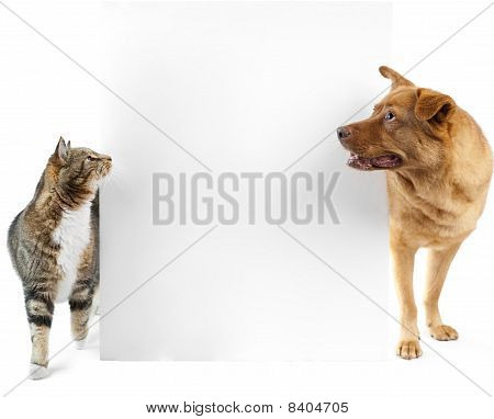 Cat And Dog Around Banner