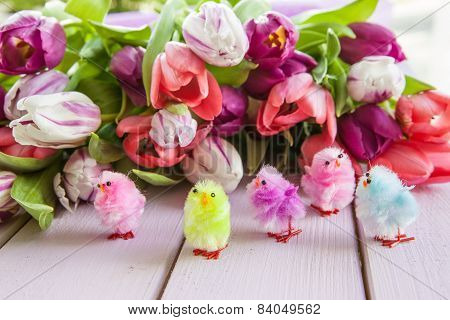 Colorful Tulips On Purple