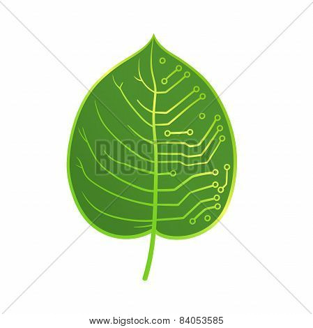 leaf microcircuit