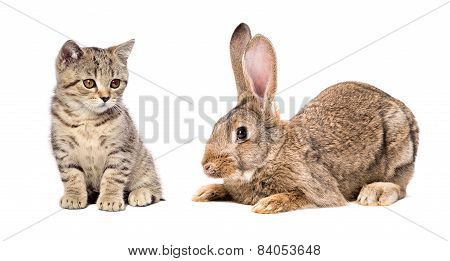 Cute kitten and rabbit