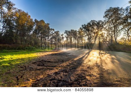 Morning Sun Enters The Deciduous Forest
