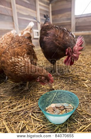 Chicken, Rooster And Coins