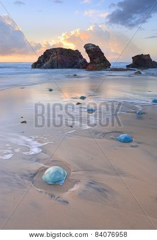 Watongo Rocks And Blue Jelly Blubber Jellyfish
