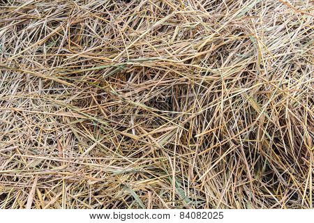 Straw Texture And Background