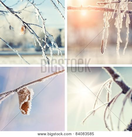 Collage Of Winter Nature Backgrounds