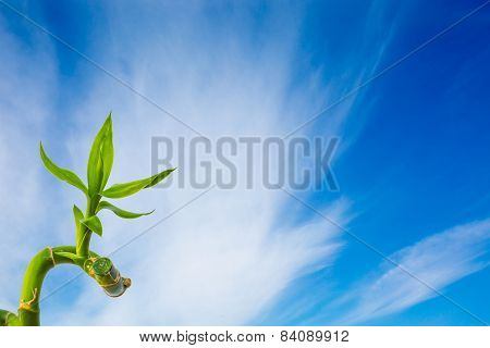 Green Bright Bamboo At Blue Sky With Clouds Background
