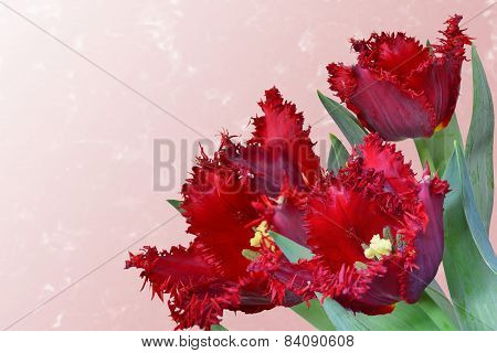 Red Fringed Tulip Bouquet