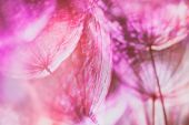 foto of pastel colors  - Colorful Pink pastel background  - JPG