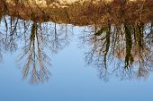 picture of locust  - Reflection in the lake of the shore surrounding of trees black locust - JPG