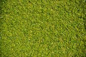 pic of grass area  - green grass with empty area for text background - JPG