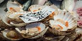 image of scallop shell  - Fresh scallops in the shell at a fish market in Italy - JPG