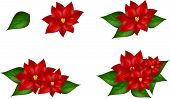 picture of poinsettia  - Set of four poinsettia illustrations on white - JPG
