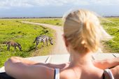 stock photo of observed  - Woman on african wildlife safari observing zebras from open roof safari jeep - JPG