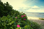 stock photo of hot-weather  - Sea coast in the spring in hot weather - JPG