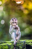 pic of baby-monkey  - Little baby - JPG