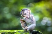 pic of baby-monkey  - Little baby - JPG