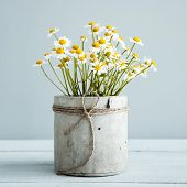 pic of flower pot  - Bouquet of daisy - JPG