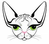 pic of domestic cat  - Vector illustration of cat - JPG
