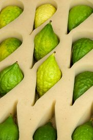 picture of sukkot  - Etrog the yellow citron is on display at a four species market for the Jewish holiday of Sukkot - JPG