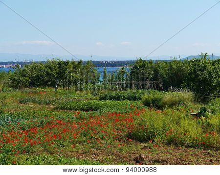 Red poppy flowers and vegetables