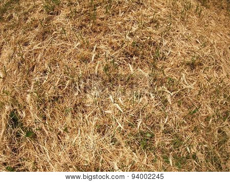 Top View Of Dry Grass In The Meadow