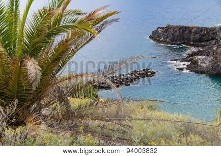 Palm And Rocky Sea Coast