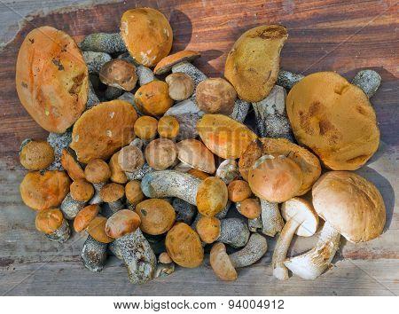 Orange-cap boletus on a wooden table